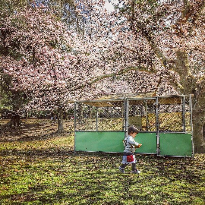 日本拍照最佳景点 日本有什么好吃的
