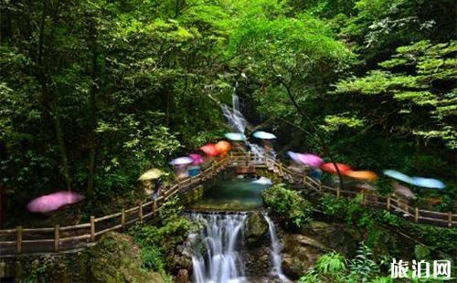 重庆黑山谷原始森林一日游攻略