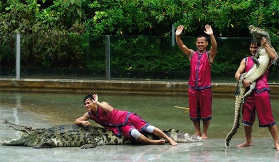 广州鳄鱼公园占地2000余亩 目前最大的鳄鱼公园