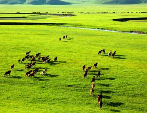 全球四大美丽草原排行榜