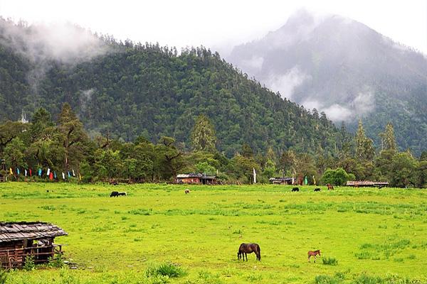 西藏林芝南伊沟风景区有什么好玩的及门票价格